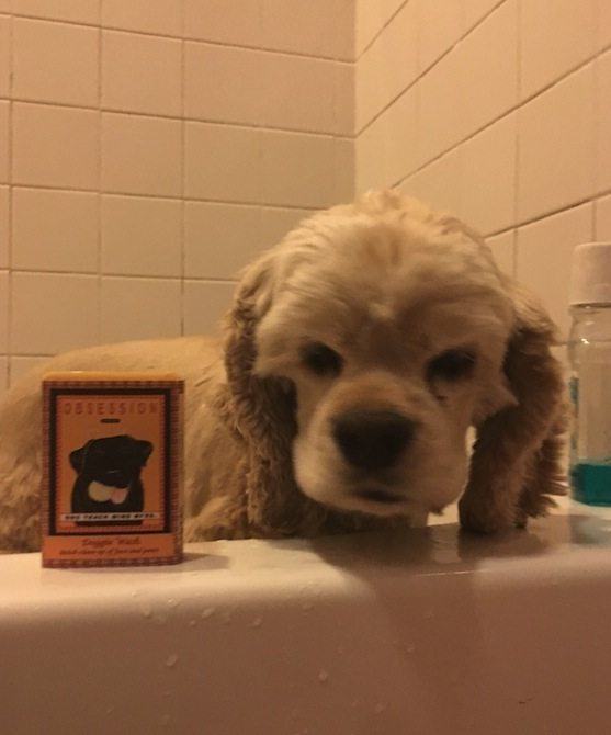 Your doggie will love the olive oil soap too!