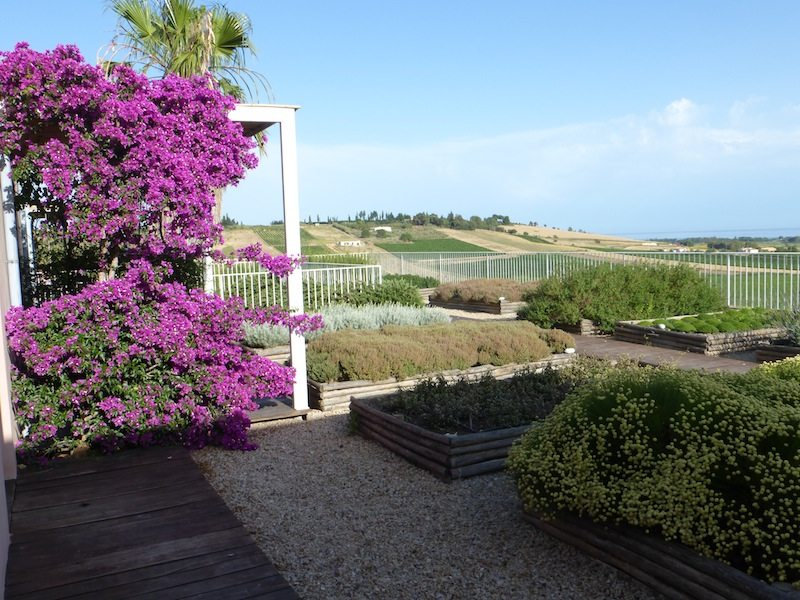 Herbs and Grape Vines overlooking the sea